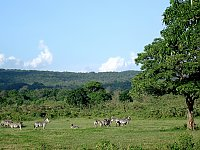 Region Arusha